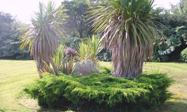 newpic garden